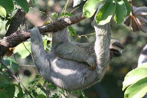 2009-02-24--sloth2.jpg