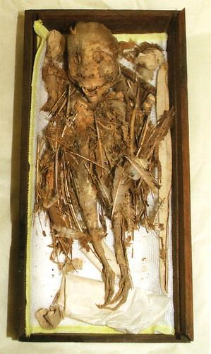 Momia tengu del museo Hachinohe