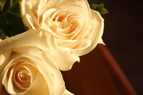 so pretty. thank you, self. :)