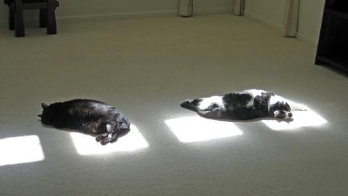 House- Sun Spots