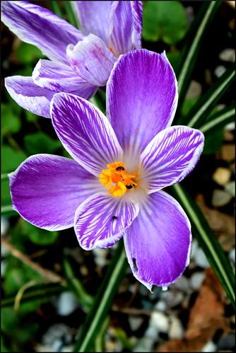flower1 von Ihnen.