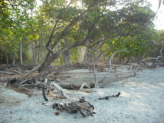 Forest along the beach