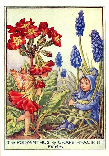 011-polyanthus_and_grape_hyacinth_flower_fairy