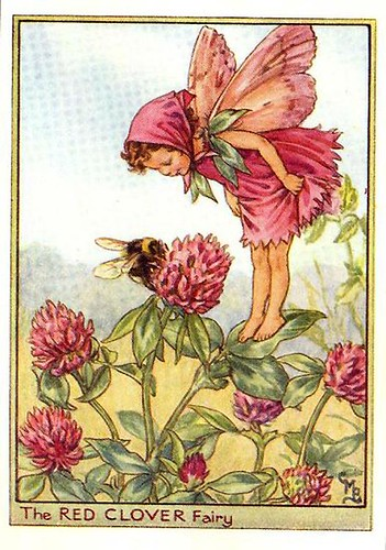 015-red_clover_flower_fairy