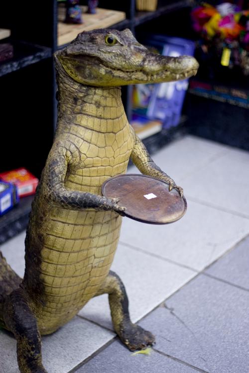 Gator waiter.
