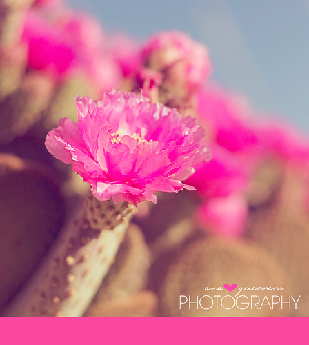 ::::: desert . beauty :::::