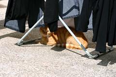 (patryka) Tags: cat garden picis