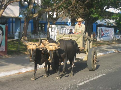 A farmer, Pinar del Rio