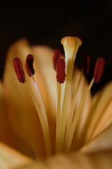 Flower (tishblack) Tags: flowers creativephotography