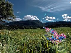 Un día radiante (II) (Juan Machado [McKeyn]) Tags: naturaleza andalucía spain flor cádiz campodegibraltar losbarrios laisladelosdespropositos