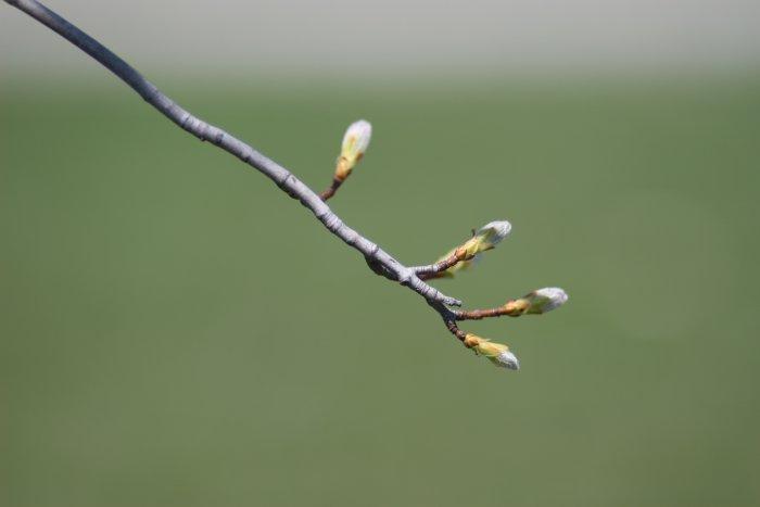 04-23-tree1