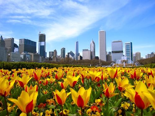 Chicago in full bloom
