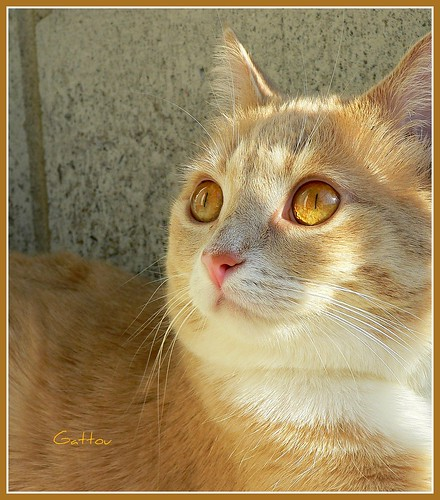 Chat Soleil..  Sunny cat ..   ;o)