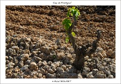 Quelques mois plus tard ... rendez-vous pris ! (Michel Seguret thanks you all for + 6.700.000 view) Tags: fab france green art primavera season fun vineyard spring vines nikon flickr artist arte via kunst vine pro fabulous atm vignes vignoble printemps muscat vigne languedoc naturesbest vite viticulture frhling temporada weinberg artiste cep viticultura languedocroussillon smrgsbord photographe saison herault weinstock vid frhjahr vigneto weinbau nikond200 stagione frontignan viticoltura mireval thisphotorocks checkoutmynewpics flickrverte naturallymagnificent croquenature michelseguret