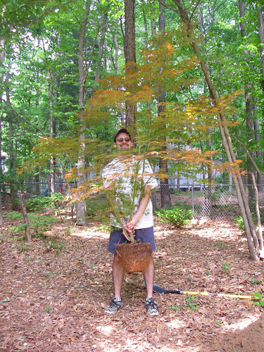 Eric illustrating the size of the Japanese maple