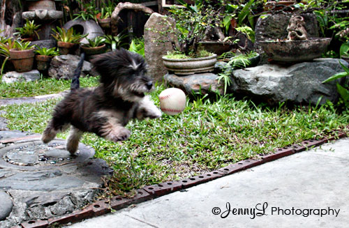 PROJECT 365: Get that Ball!