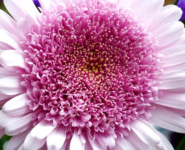 Pink by Shakti Womyn