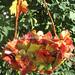 Beauty Autumn by aeromake