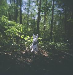 holga bunny