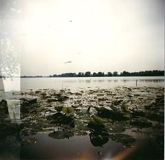 In superficie (ci che emerge) (Borbuletachiara) Tags: verde foglie alberi river holga lomography fiume mantova azzurro lombardia lilla parole travellin analogic mincio introspezione ninfee riflessioni oniricamente