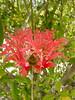 0402_bg_coralike (mollydemeter) Tags: 2002 april caymans alitoddwedding