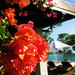 Four Seasons Villa