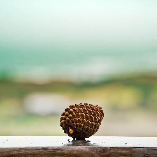 Cuba Gallery: Minimalist natural pinecone with amazing depth of field and blue sky background