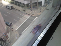 Roach on the 10th floor - outside!!! (tmcpheeters) Tags: houston roach