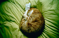 Frank (King....) Tags: sleeping pet cute green london film animal comfortable cat 35mm frank fur happy ginger lomo lca lomography furry feline afternoon fuji sleep sleepy analogue paws duvet easylife filmcameras colorphotoaward thecatwhoturnedonandoff