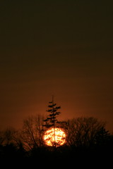 Northern Sunset, Whitby, Ontario (Tony Lea) Tags: sunset sky cloud brown sun ontario canada west tree weather yellow clouds gold evening solar skies durham tony whitby western lea anthony region climate meteorology gloaming tonylea anthonylea