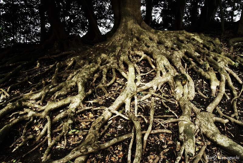 A Root