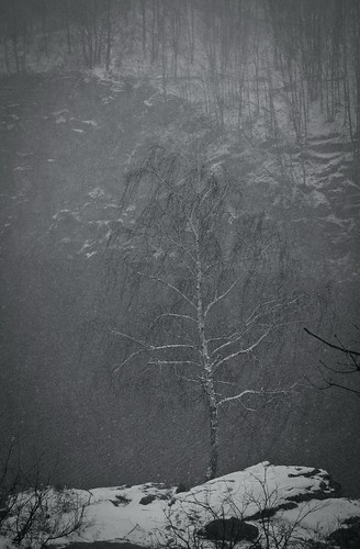 Житомир. Первый день весны