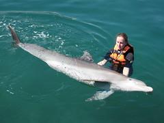 dolphin training (ABC Dolphin Trainer Academy) Tags: de dolphin delfin delfines entrenamiento positiva animaltraining refuerzo positivereinforcement dolphintraining entrenamientodeanimales