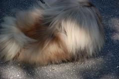 DSC_2502.JPG (holga_new_orleans) Tags: dog dogs neworleans nola citypark dogdayafternoon brettrosenbach