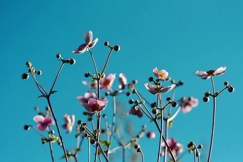 sophiemuc, flickr