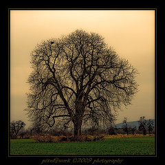 Tree in HDR mode (oliver's | photography) Tags: trees friends tree abandoned nature beautiful ph