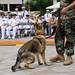 Military working dog demo