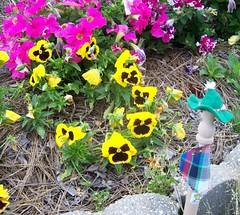 Skinny admires MrHorse's garden