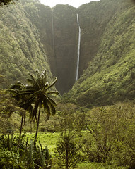 Jurassic Park (lindilindi) Tags: nature beautiful ga hawaii waterfall heaven paradise falls valley hawaiian tropical bigisland allrightsreserved waipio copyrighted hawaiiset melindapodor gettyinvited