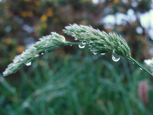 Dalkey Hill Rainy 033