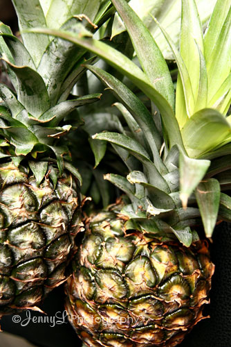Project 365: Sweet Pineapples