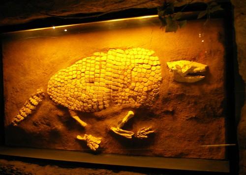 Prehistoric Armadillo