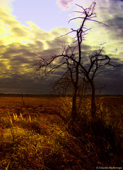 The evening beam (Claudio.Ar) Tags: friends light sunset santafe color tree luz argentina clouds atardecer evening searchthebest artistic sony beam nubes chapeau rbol fields sensational cielos topf100 legacy dsc campos pampa tlc h9 magnumopus firstquality littlestories imagepoetry flickrsbest bej gigashot mywinners abigfave worldbest platinumphoto anawesomeshot aplusphoto visiongroup goldsealofquality betterthangood theperfectphotographer picswithsoul thesuperbmasterpiece multimegashot treesdiestandingup photoexel claudioar claudiomufarrege reflectyourworld naturescreations phvalue artofimages imagesforthelittelprince musicsbest platinumpeaceaward absolutelyperrrfect bestcapturesaoi oracosm oracope oracobb committeeofartists magicunicornverybest sailsevenseas newgoldenseal