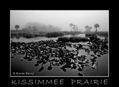 """A Perfect Morning"" (Kevin B Photo) Tags: park morning trees wild summer blackandwhite bw usa black tree nature wet water beautiful beauty silhouette horizontal fog america dawn day florida south central foggy southern daytime summertime fl lilypads kevinbarry cabbagepalms wowiekazowie kissimmeeprairiepreservestatepark"