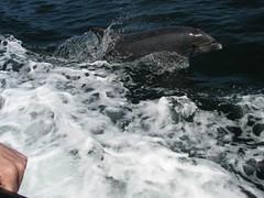 Fungi, the Dingle dolphin (davnagy) Tags: ireland irish nature animals canon is dingle kerry powershot fungi természet delfin s3 canonpowershots3is