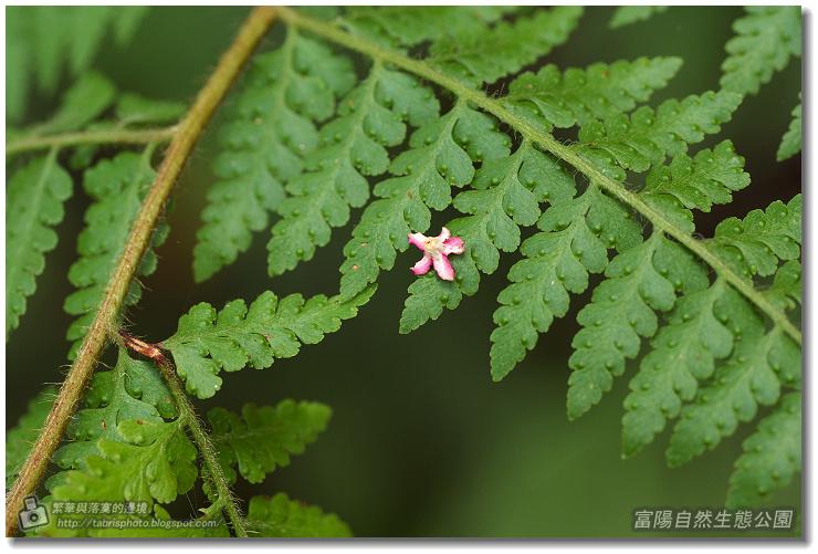 fuyang04
