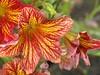 Georgeson Botanical Garden-6