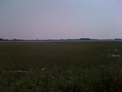 8-marsh and crane
