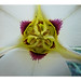 The Inside Story - Sego Lily