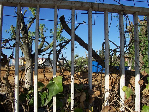 Árboles de la Antigua Piscina